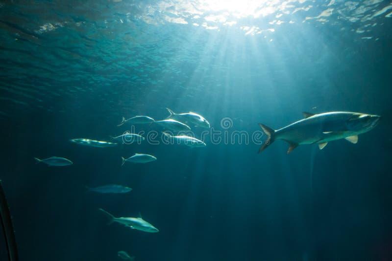 Fish in Blijdorp Zoo Aquarium stock photos