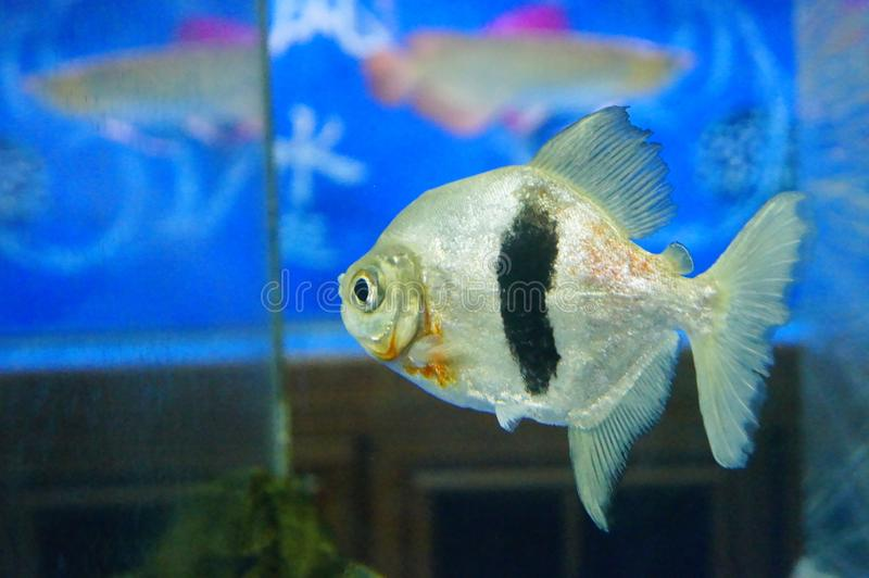 Fish in the aquarium, very cute fish stock photo