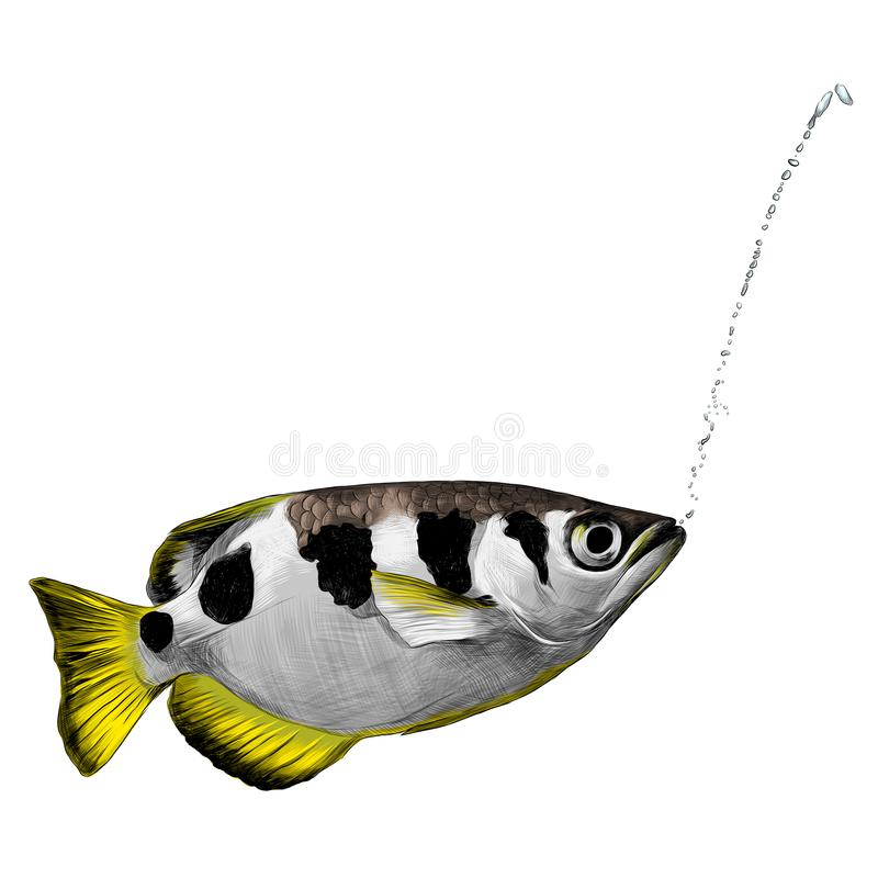 Bird amaranth sketch vector. Fish Archer fish with spots on the back and a jet mouth sketch vector graphics color picture vector illustration