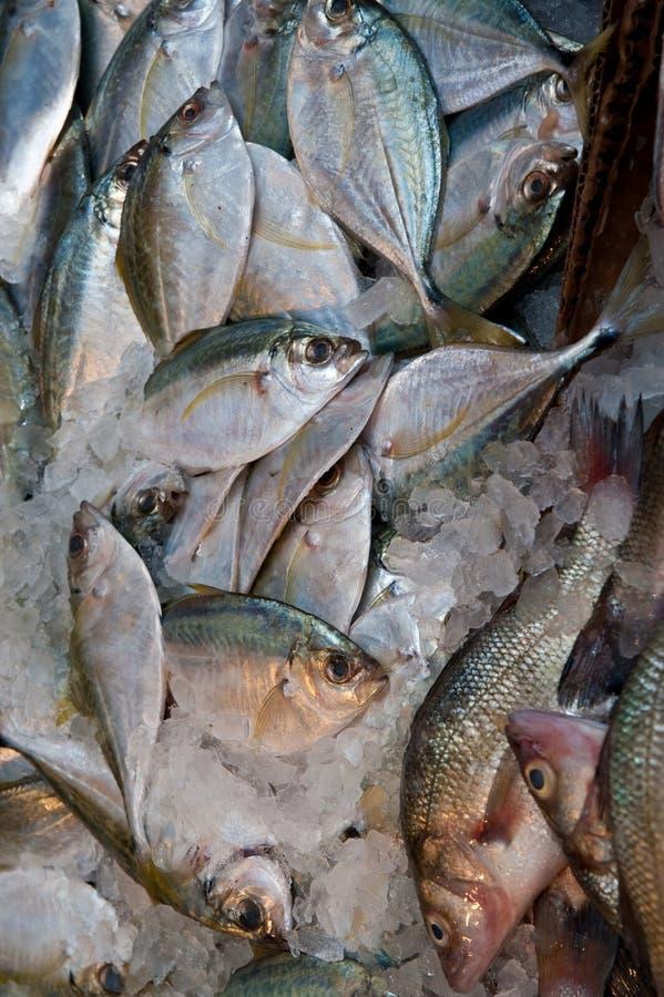 Free Fish At A Market Royalty Free Stock Image - 9209126