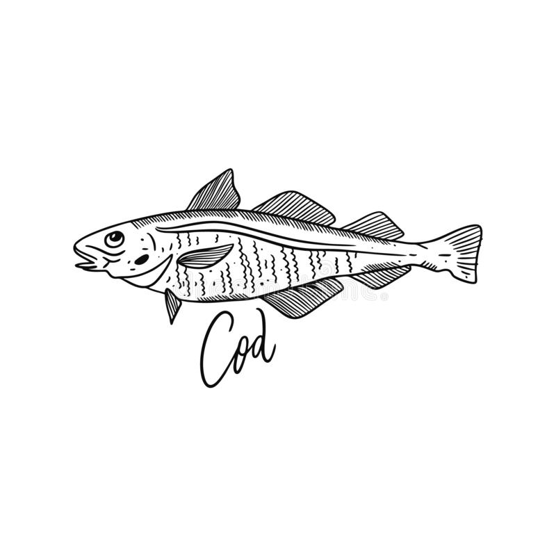 Fish Atlantic Cod. Hand drawn vector illustration. Engraving style. Isolated on white background. Design for seafood market, package, poster, banner, t-shirt stock illustration