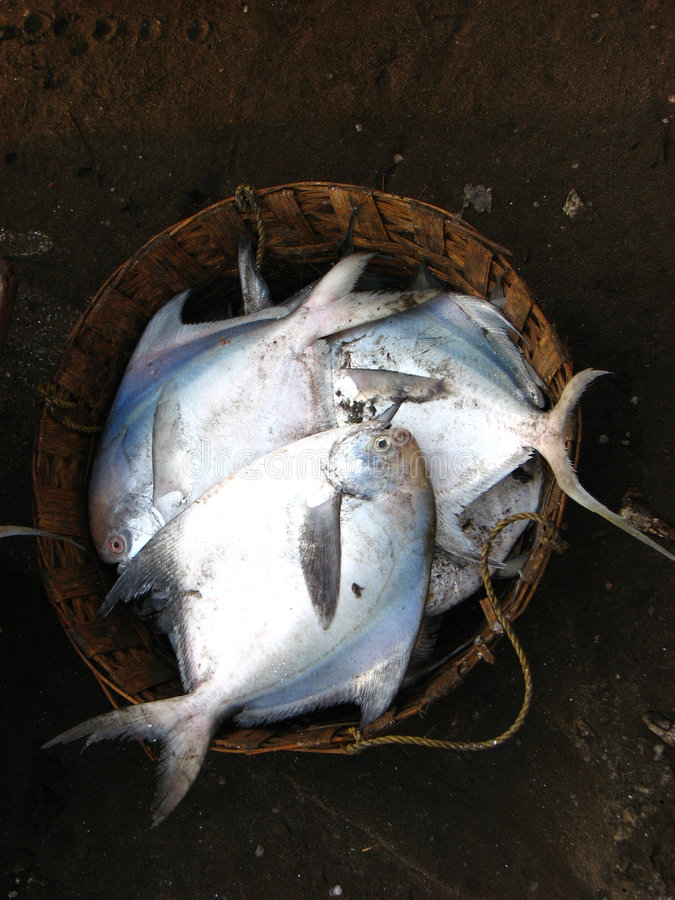 Download Fish Basket stock image. Image of fresh, kill, delicious - 2203805