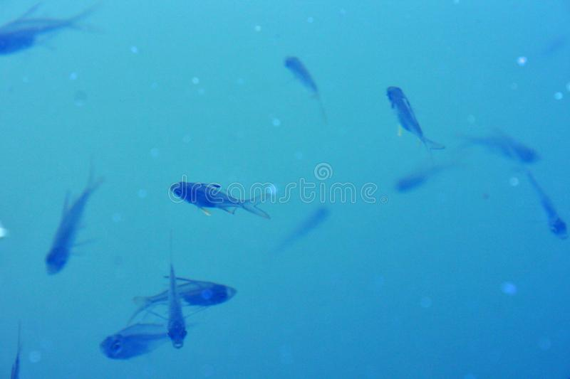Fish Blue Clear Focused Lake Day Blur Water Background stock image