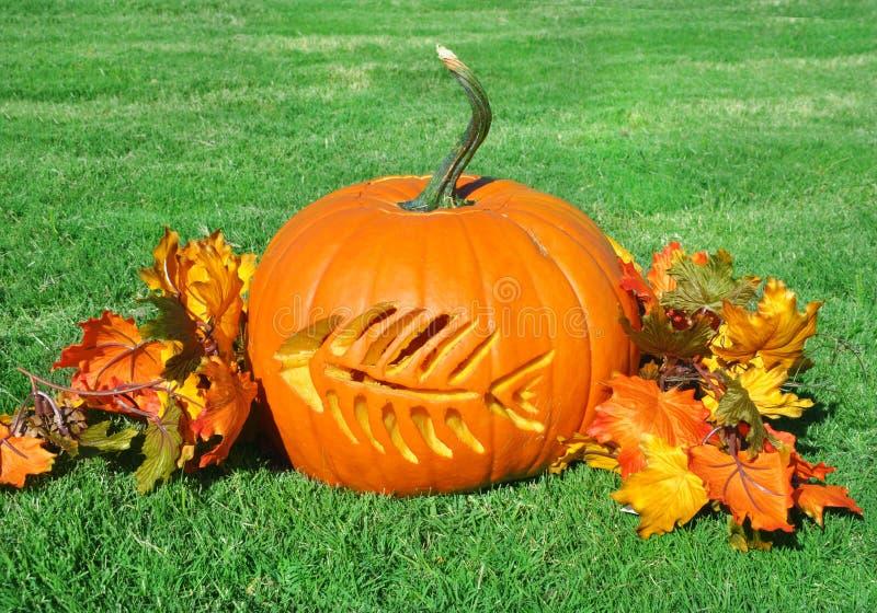 Fish bone carved in festive fall pumpkin stock image