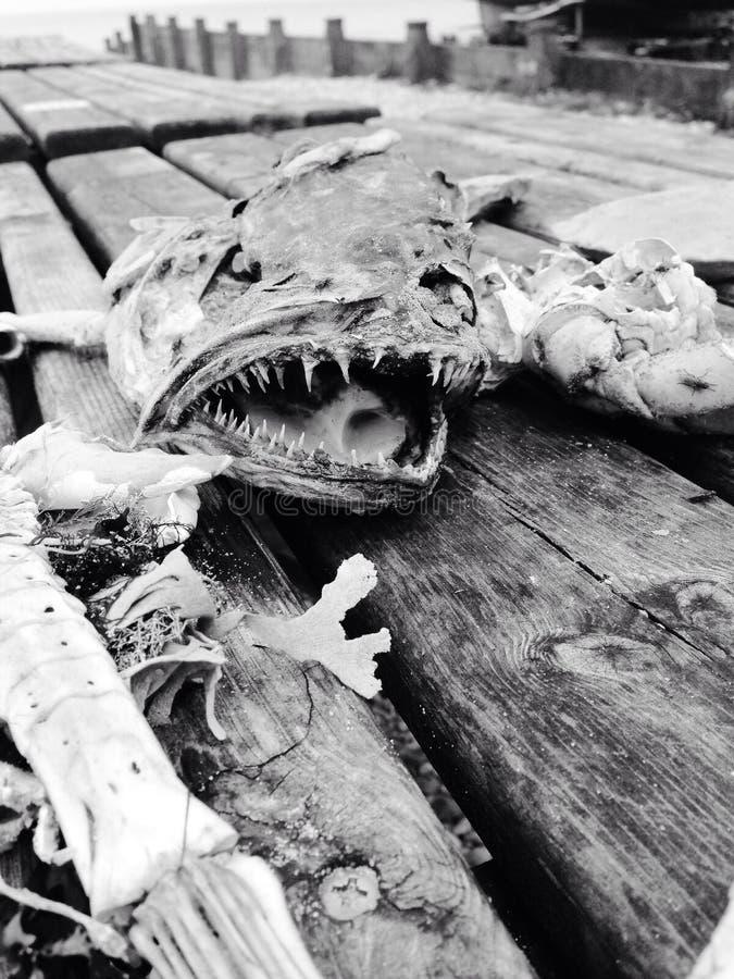 Fish bones at the seaside royalty free stock image