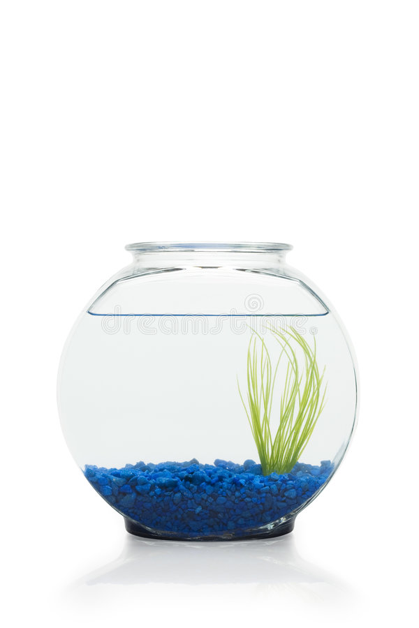 Free Fish Bowl Royalty Free Stock Photo - 6244705
