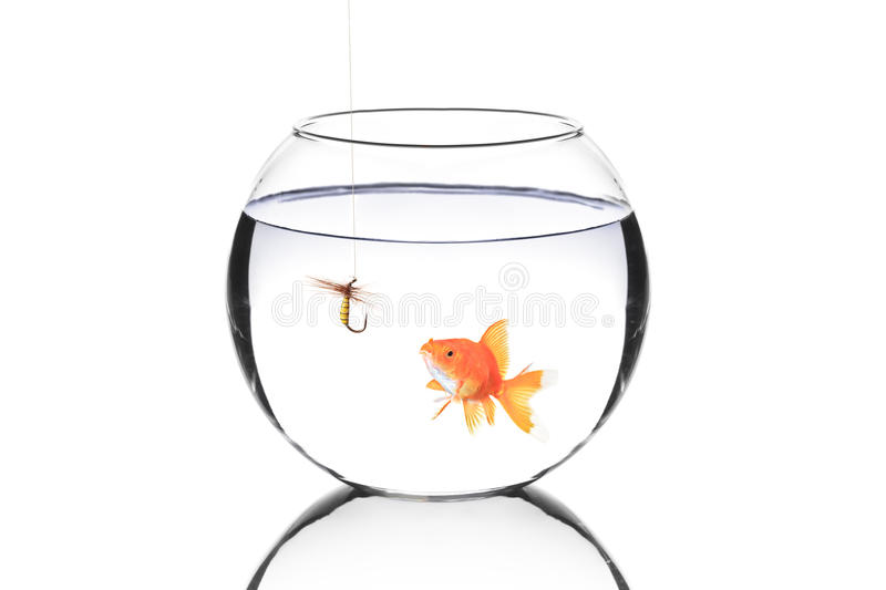 Fish bowl with a fishing hook and a fish stock photography