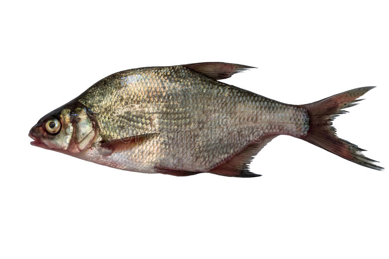 Download Fish Bream Isolated On White Background. Stock Photo - Image: 83724110