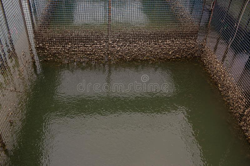 Fish cage floating in river use for raising fish, built with blue plastic barrels, iron pipes, wood planks and net. stock photo