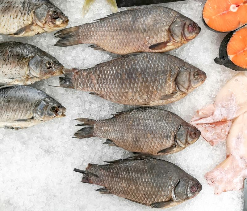 Fish carp in the ice on the shelf of the market stock photos