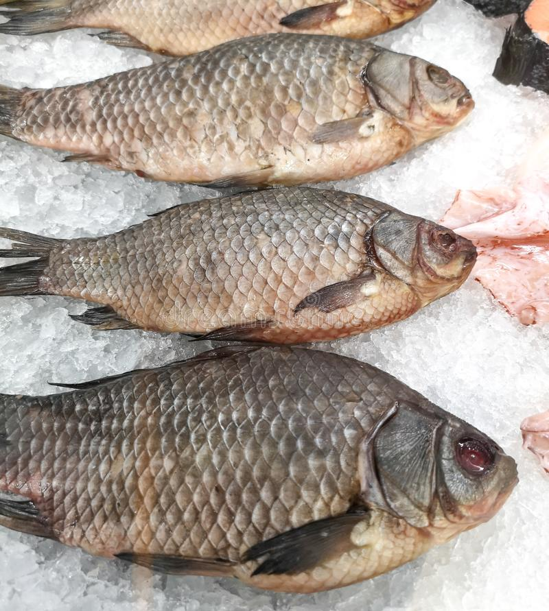 Fish carp in the ice on the shelf of the market royalty free stock photo