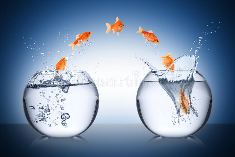 Fish change concept stock images