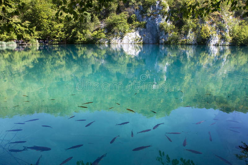 Fish in clear turquoise water of Plitvice Lakes stock photography