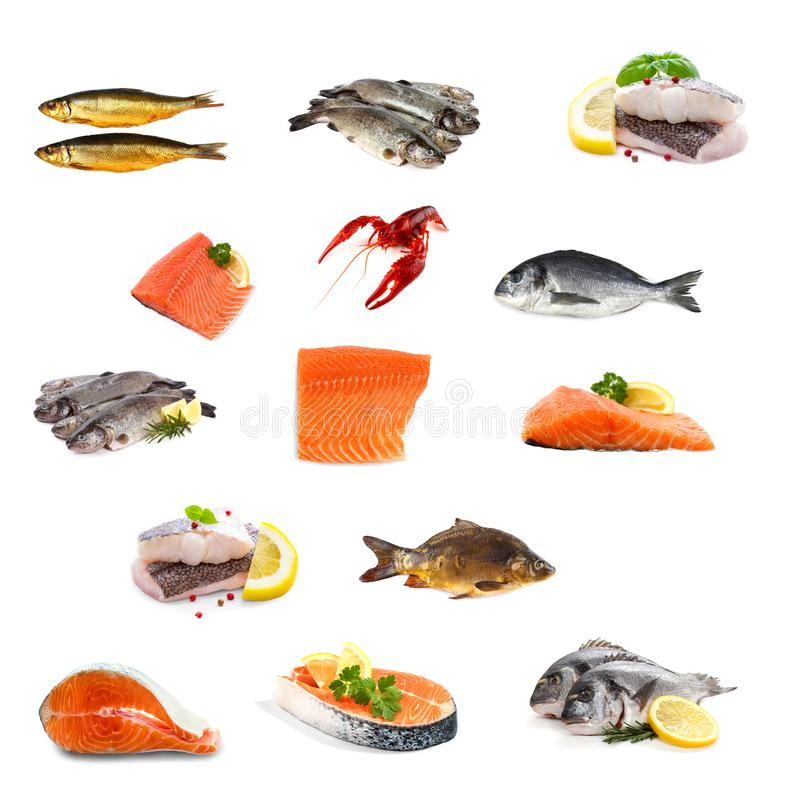 Fish collage isolated on white royalty free stock photos