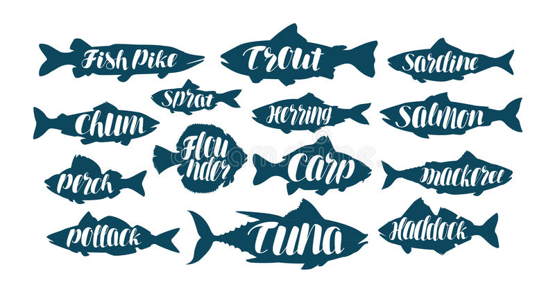 Fish, collection labels or logos. Seafood, food, fishing, angling set icons. Handwritten lettering, calligraphy vector vector illustration