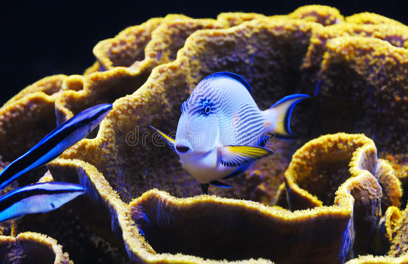 Fish and coral of the Red Sea stock photo