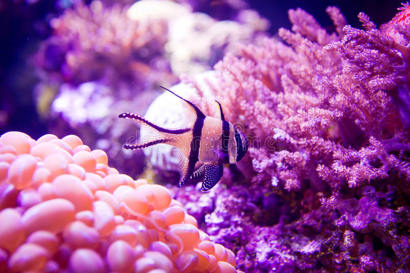 Fish in a coral reef anemone stock images
