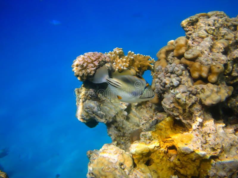 Fish on the coral reef stock photos