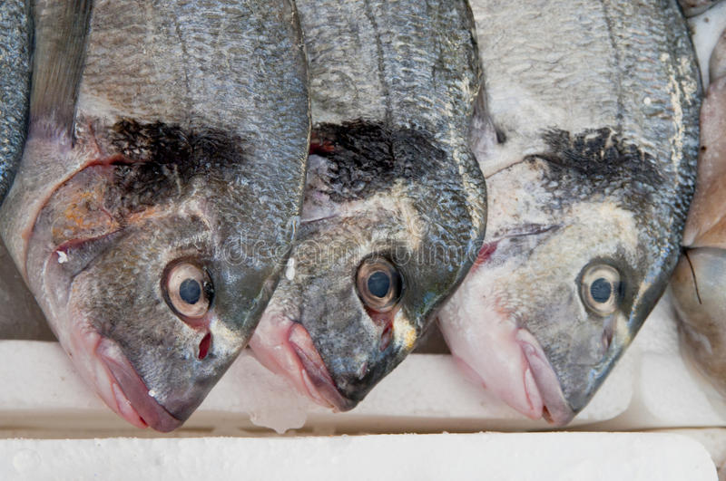 At the Fish Counter stock images