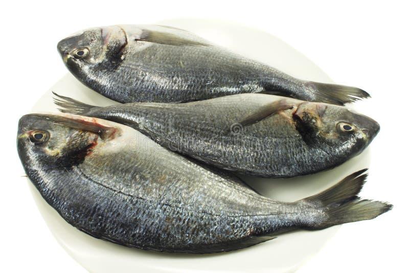Fish dorado. Isolated on white background stock image