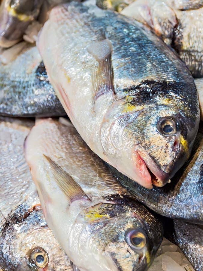 Fish Dorado ice fish market. Fish Dorado fishing. Fishes on the ice fish market Mercat de la Boqueria, Barcelona stock image