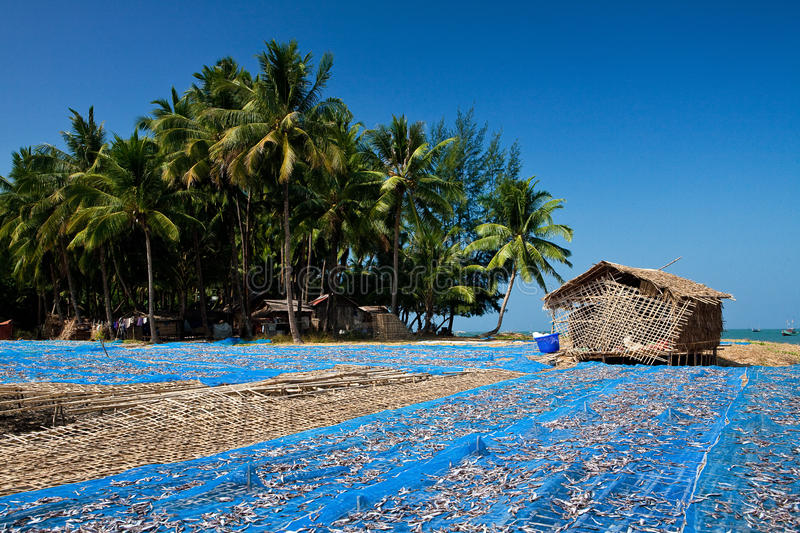 Download Fish Drying By The Beach On A Fisherman's Village Stock Photo - Image: 13979872