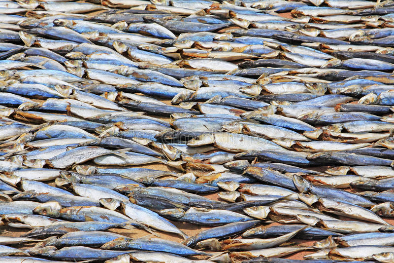 Fish Drying In The Sun stock photography