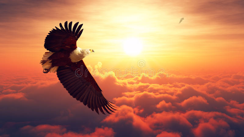 Fish Eagle flying above clouds royalty free stock photography