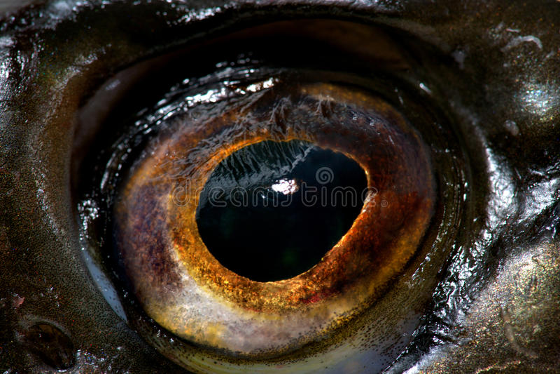 Download Fish Eye Stock Photography - Image: 24096962