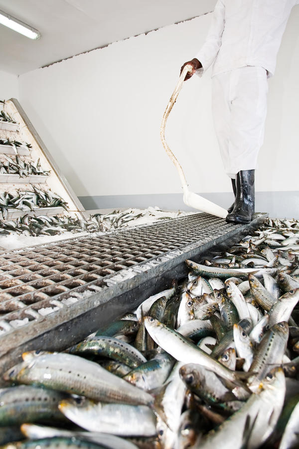 Fish factory. stock images