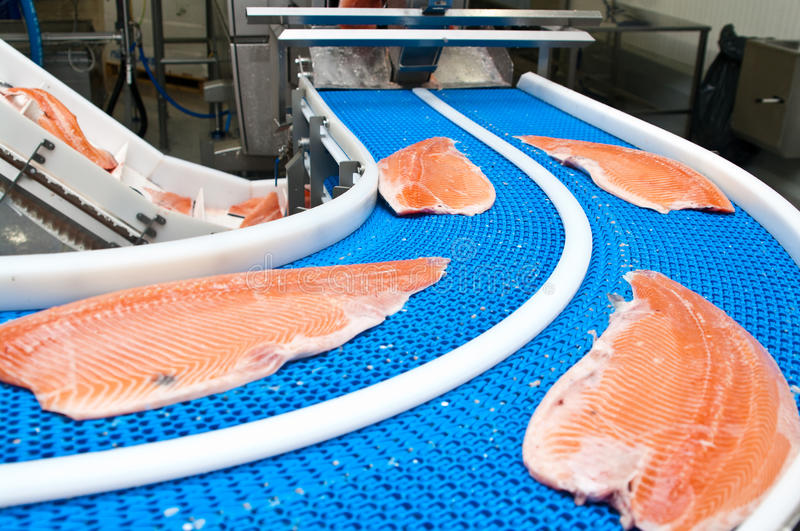 Fish factory salmon production. Preparing the product from raw fish to ready for sale item. Whole series with sebczseries933 keyword stock photography