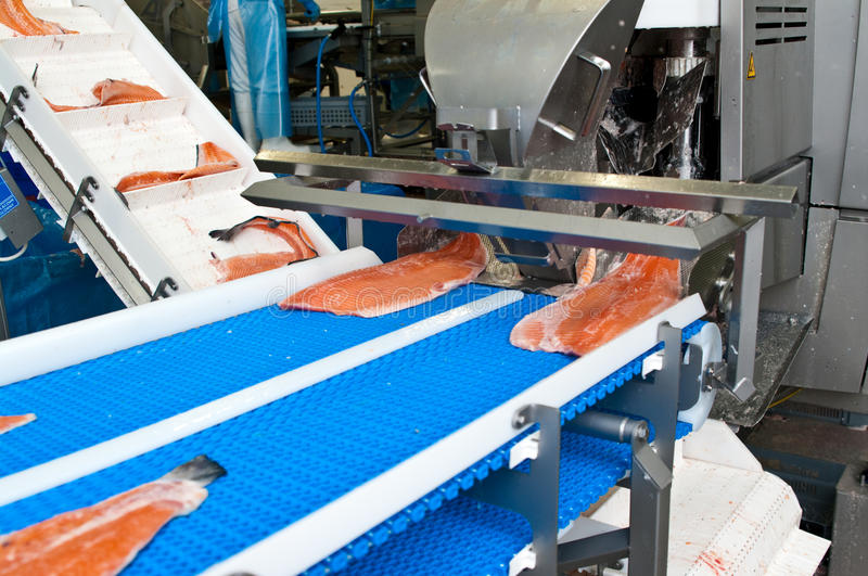 Fish factory salmon production. Preparing the product from raw fish to ready for sale item. Whole series with sebczseries933 keyword royalty free stock image