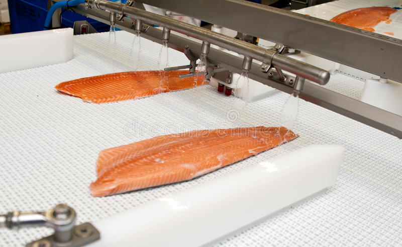 Fish factory salmon production. Preparing the product from raw fish to ready for sale item. Whole series with sebczseries933 keyword royalty free stock photo
