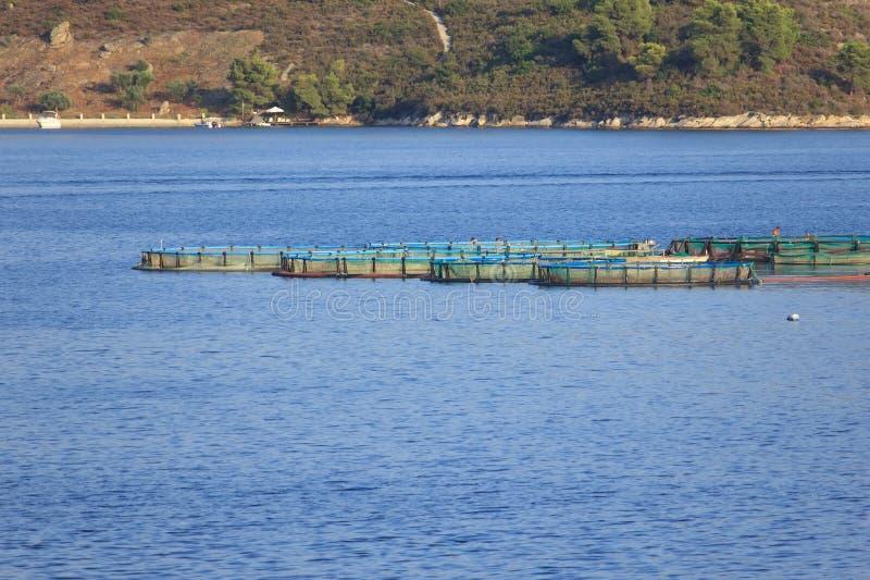 Fish farm stock image