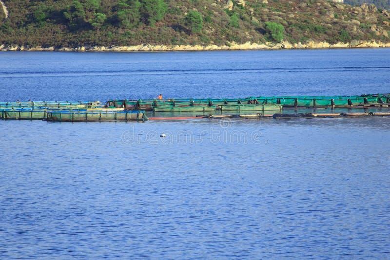 Fish farm stock photos
