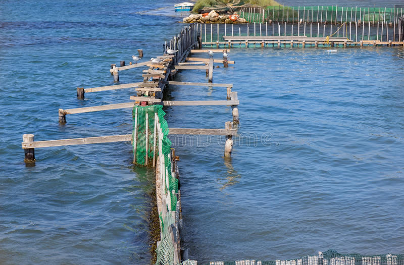 Fish farm and seagull stock images