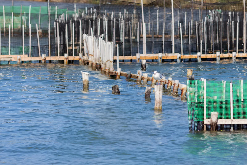 Fish farm and seagull stock photos