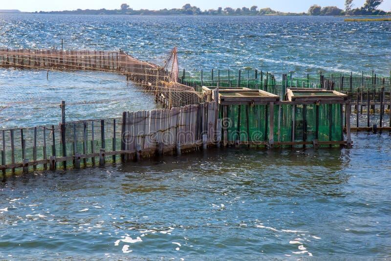 Fish farm and seagull stock image