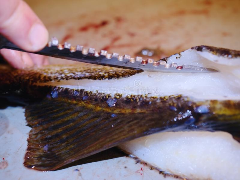 Fish farm slaughterer hands gutting cod, the codfish. Man hand is filleting freshly caught fish royalty free stock image