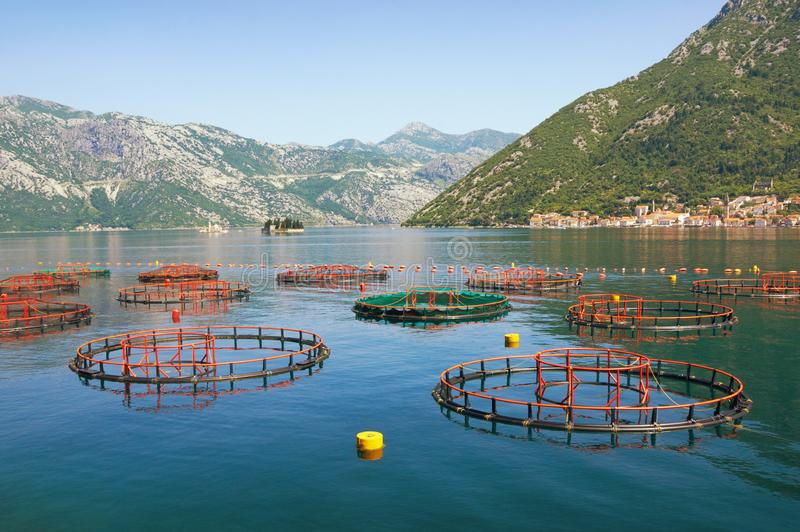 Fish farm. Sunny summer Mediterranean landscape. Montenegro, Adriatic Sea, Bay of Kotor. View of two small islands and Perast town in the distance royalty free stock photo