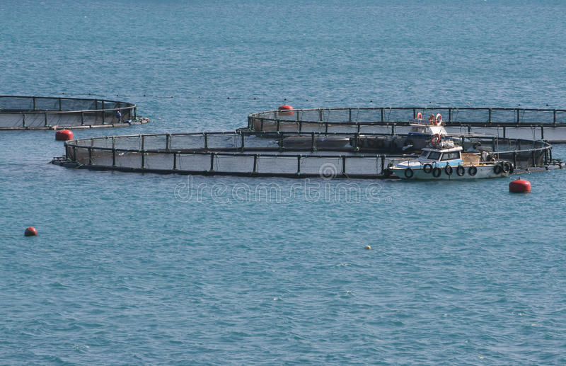 Download Fish farming stock photo. Image of marine, boat, business - 13954402