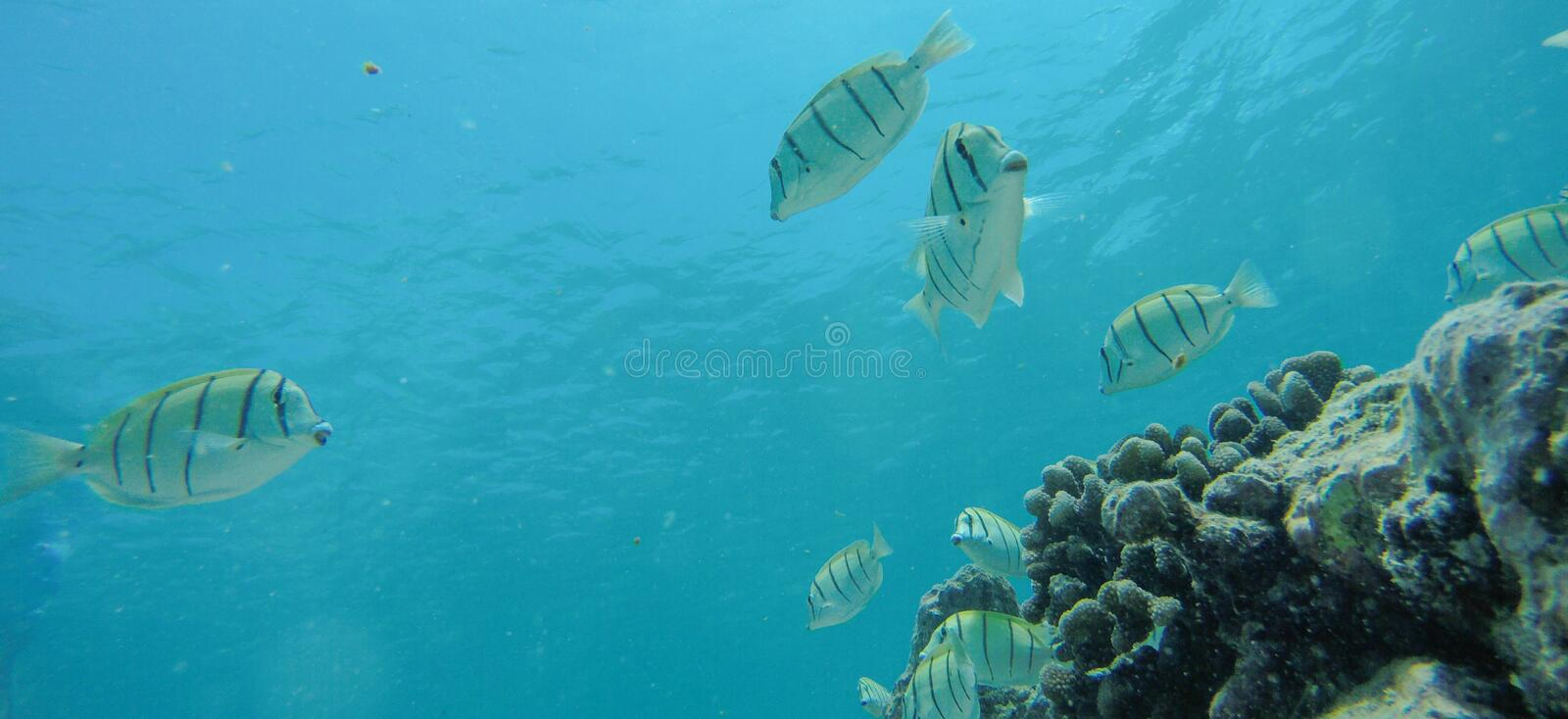Underwater life at Maldives stock images