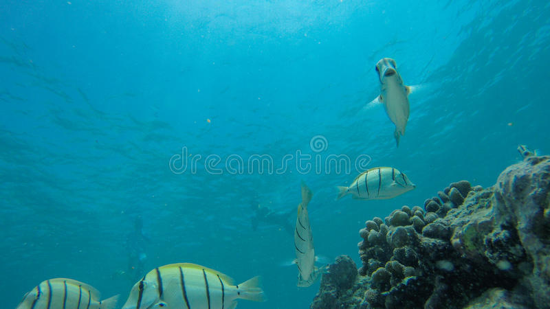 Underwater life at Maldives stock photos