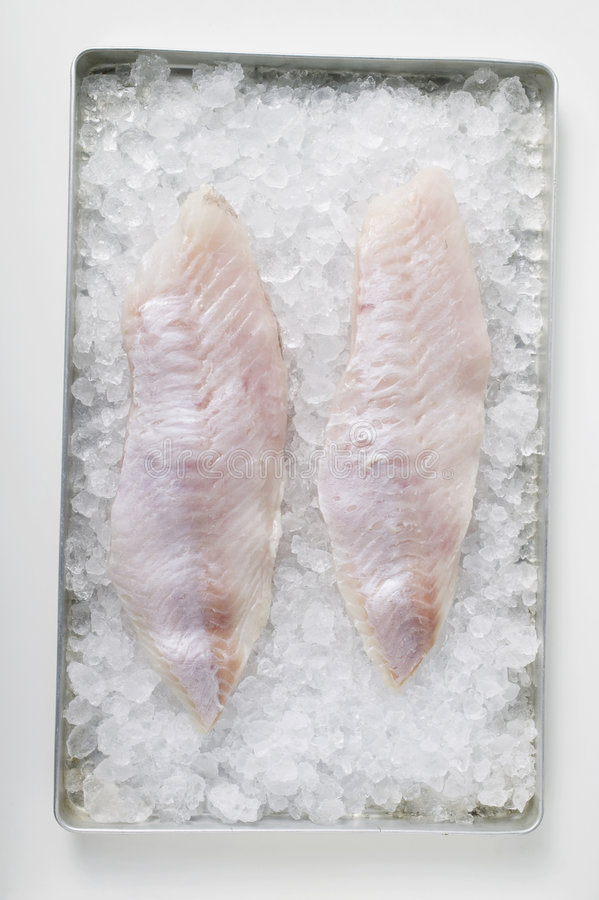 Fish fillets on ice. Two fish fillets on ice royalty free stock photography