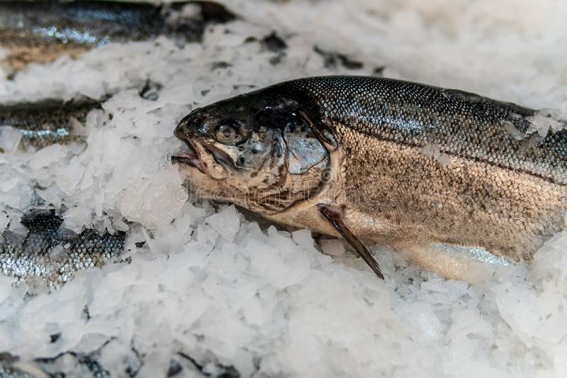 Fish, fish steaks and fish fillets lie on the ice in the supermarket royalty free stock photography