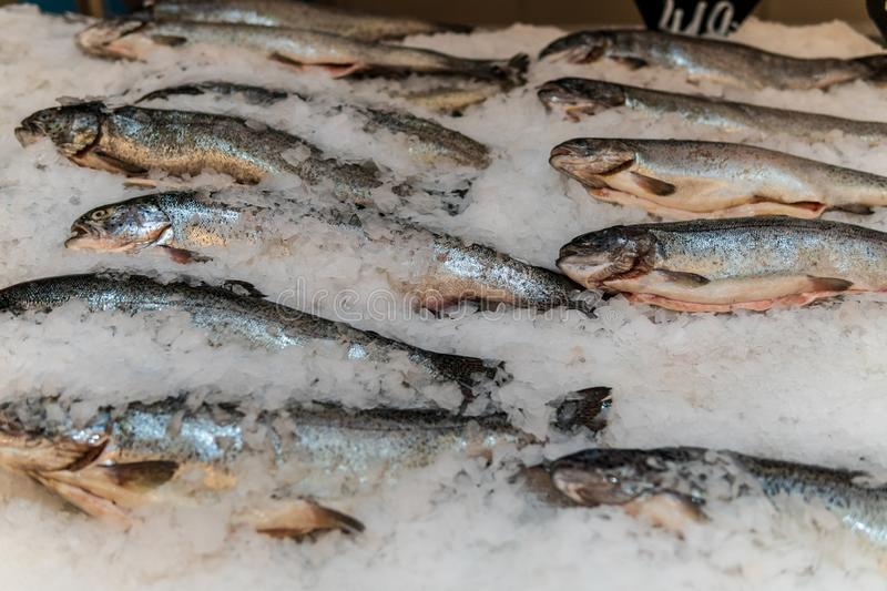 Fish, fish steaks and fish fillets lie on the ice in the supermarket royalty free stock image
