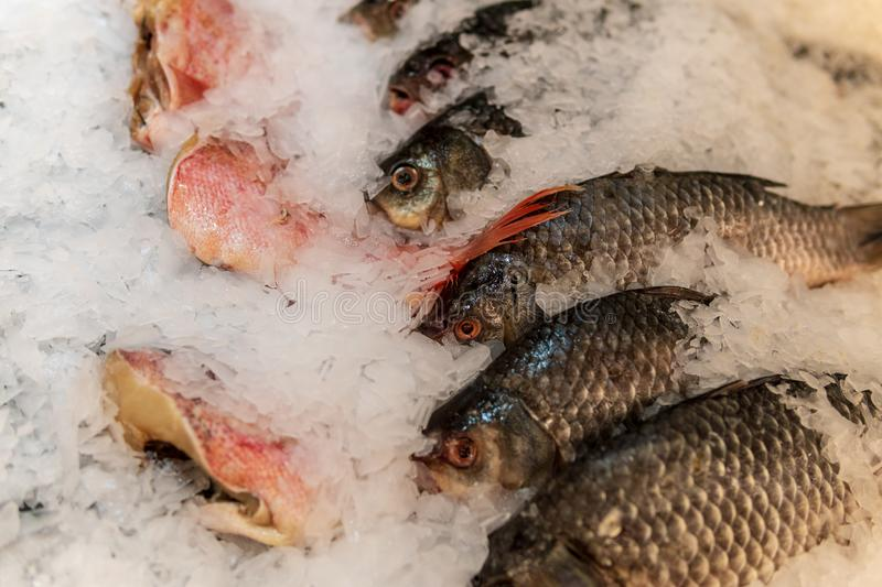 Fish, fish steaks and fish fillets lie on the ice in the supermarket stock photography