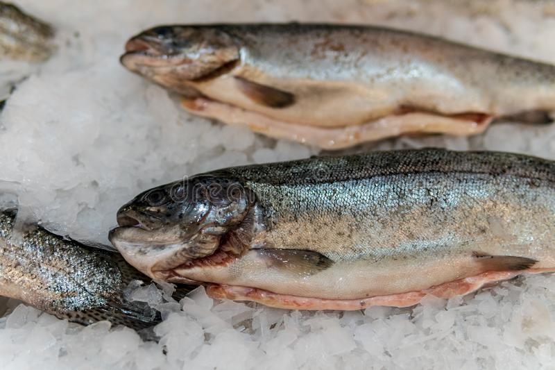 Fish, fish steaks and fish fillets lie on the ice in the supermarket royalty free stock photos