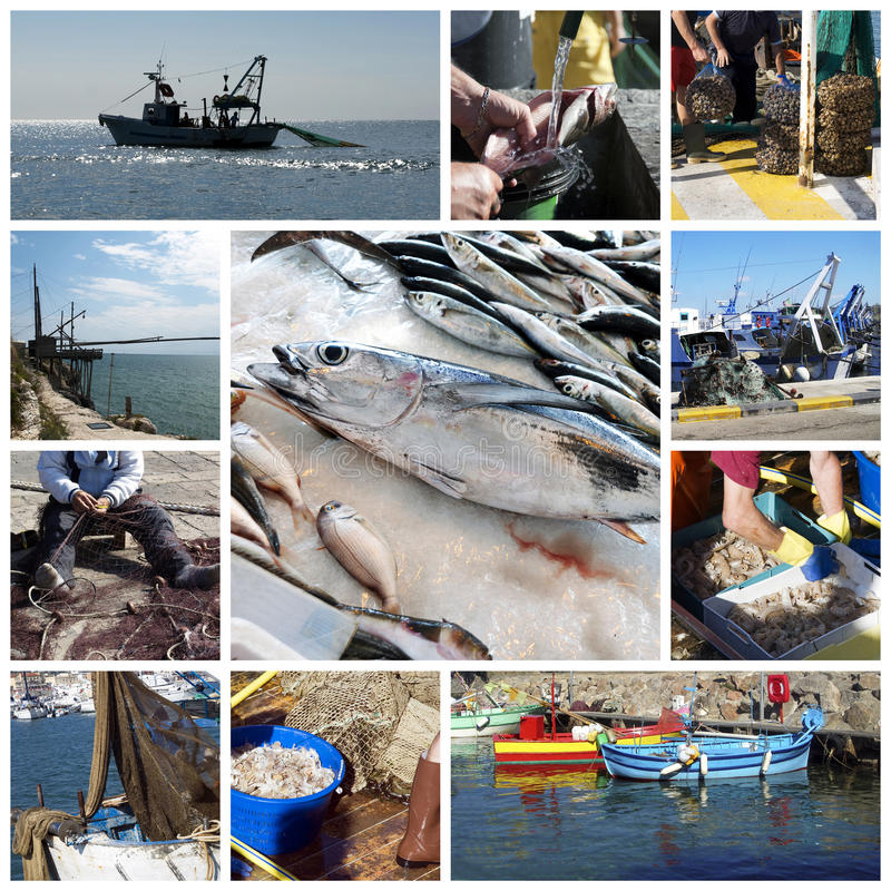 Fish and fishing collage