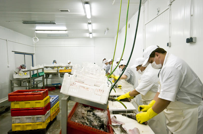 Fish food factory royalty free stock images